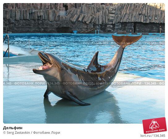 Купить «Дельфин», фото № 134345, снято 4 апреля 2007 г. (c) Serg Zastavkin / Фотобанк Лори