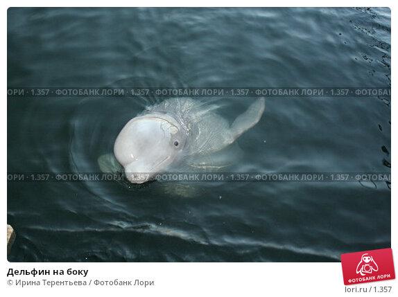 Дельфин на боку, эксклюзивное фото № 1357, снято 15 сентября 2005 г. (c) Ирина Терентьева / Фотобанк Лори