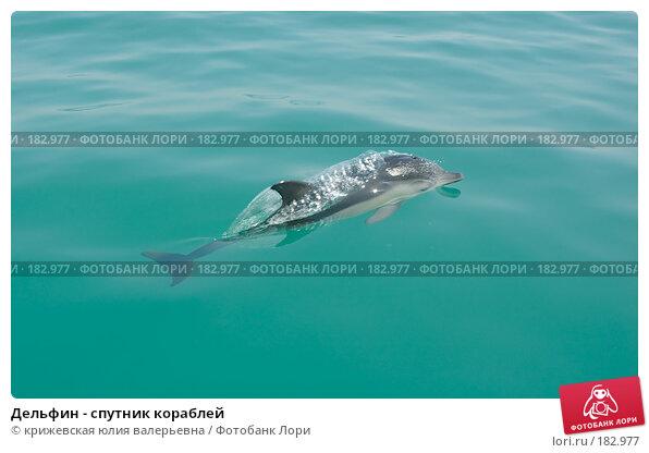 Дельфин - спутник кораблей, фото № 182977, снято 24 августа 2007 г. (c) крижевская юлия валерьевна / Фотобанк Лори