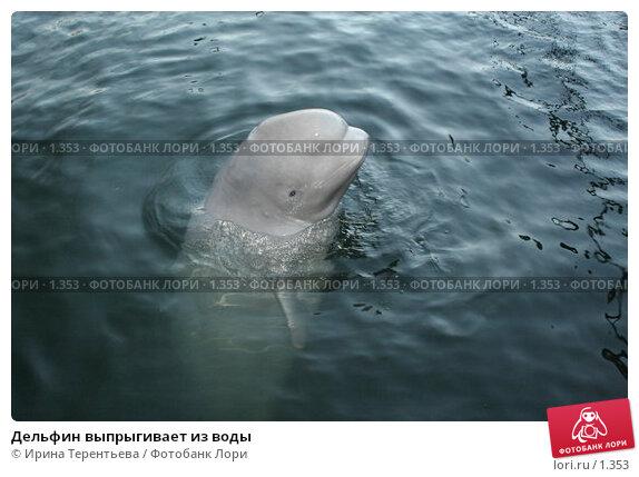 Купить «Дельфин выпрыгивает из воды», эксклюзивное фото № 1353, снято 15 сентября 2005 г. (c) Ирина Терентьева / Фотобанк Лори