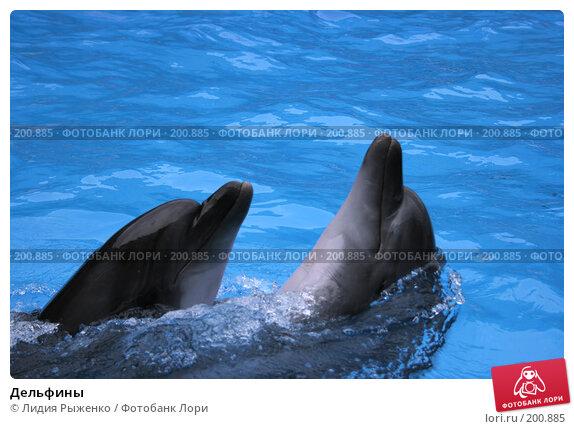 Купить «Дельфины», фото № 200885, снято 8 сентября 2007 г. (c) Лидия Рыженко / Фотобанк Лори