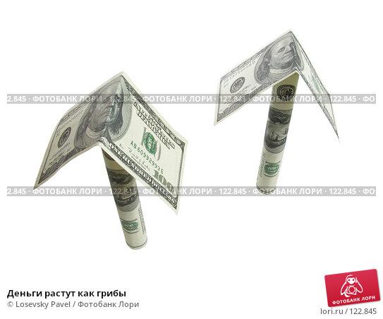 Деньги растут как грибы, фото № 122845, снято 4 ноября 2005 г. (c) Losevsky Pavel / Фотобанк Лори