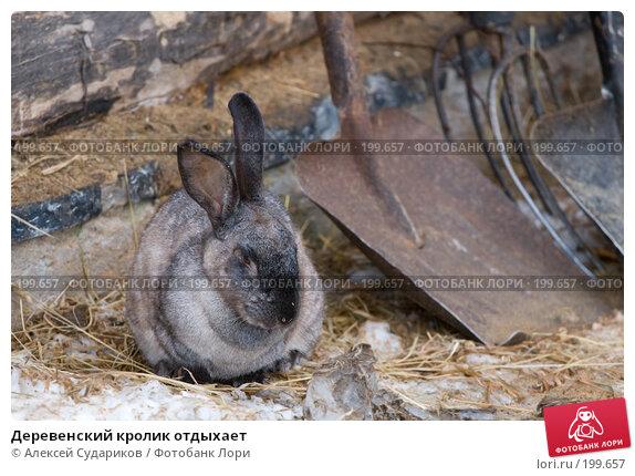 Деревенский кролик отдыхает, фото № 199657, снято 10 февраля 2008 г. (c) Алексей Судариков / Фотобанк Лори