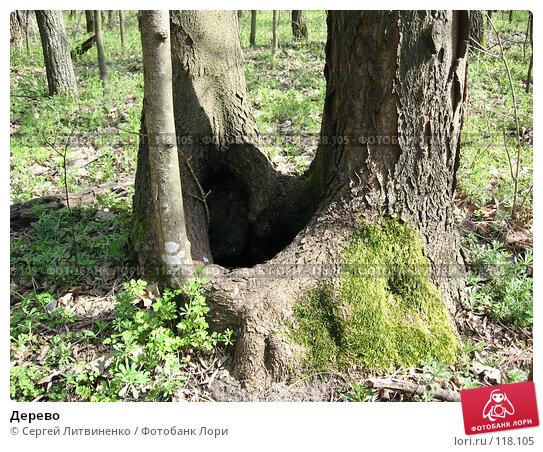 Дерево, фото № 118105, снято 8 апреля 2007 г. (c) Сергей Литвиненко / Фотобанк Лори