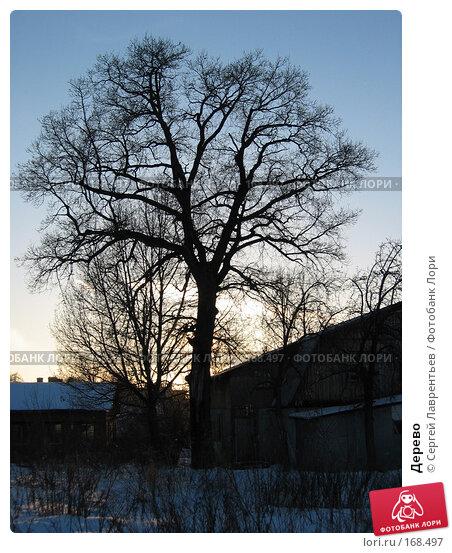 Дерево, фото № 168497, снято 22 февраля 2003 г. (c) Сергей Лаврентьев / Фотобанк Лори