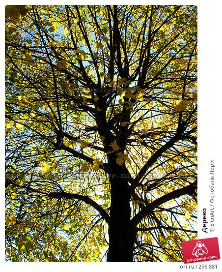 Дерево, фото № 256881, снято 28 марта 2017 г. (c) ElenArt / Фотобанк Лори
