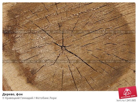 Дерево, фон, фото № 241065, снято 24 июня 2017 г. (c) Кравецкий Геннадий / Фотобанк Лори