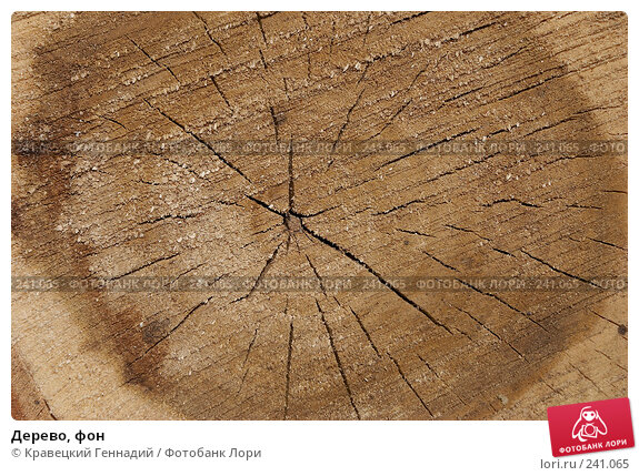 Дерево, фон, фото № 241065, снято 1 мая 2017 г. (c) Кравецкий Геннадий / Фотобанк Лори