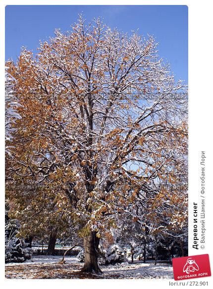 Купить «Дерево и снег», фото № 272901, снято 24 ноября 2007 г. (c) Валерий Шанин / Фотобанк Лори