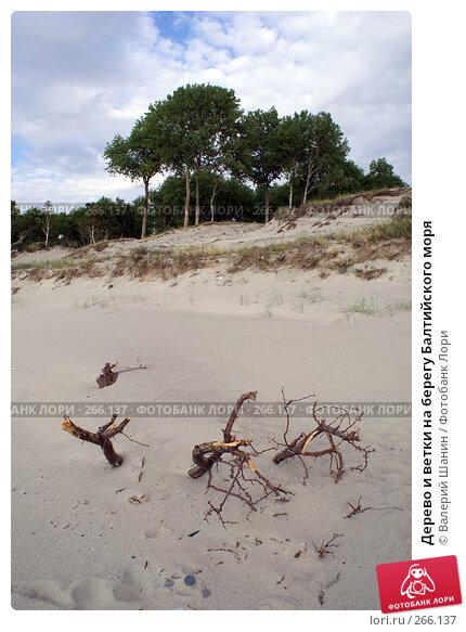 Дерево и ветки на берегу Балтийского моря, фото № 266137, снято 23 июля 2007 г. (c) Валерий Шанин / Фотобанк Лори