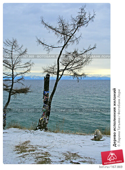 Дерево исполнения желаний, фото № 167869, снято 29 декабря 2007 г. (c) Ларина Татьяна / Фотобанк Лори