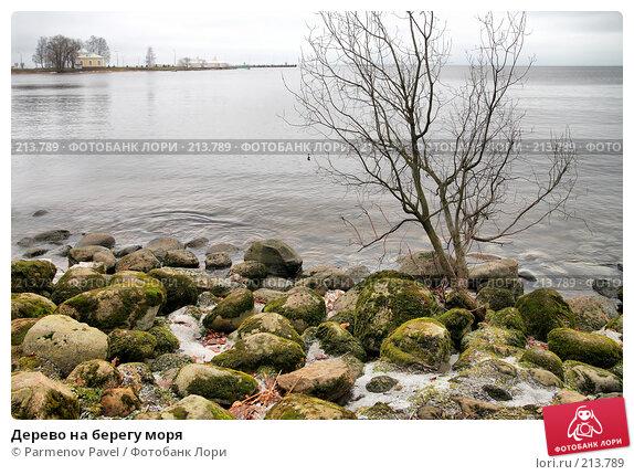 Купить «Дерево на берегу моря», фото № 213789, снято 13 февраля 2008 г. (c) Parmenov Pavel / Фотобанк Лори