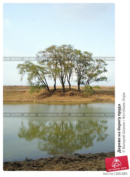 Дерево на берегу пруда, фото № 265885, снято 24 сентября 2007 г. (c) Валерий Шанин / Фотобанк Лори