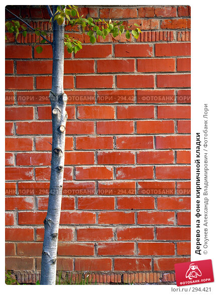 Дерево на фоне кирпичной кладки, фото № 294421, снято 10 мая 2008 г. (c) Окунев Александр Владимирович / Фотобанк Лори