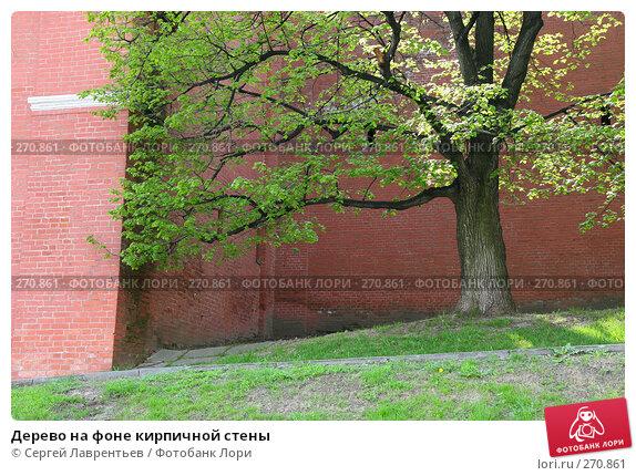 Дерево на фоне кирпичной стены, фото № 270861, снято 2 мая 2008 г. (c) Сергей Лаврентьев / Фотобанк Лори