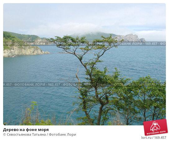 Купить «Дерево на фоне моря», фото № 169457, снято 14 июля 2007 г. (c) Севостьянова Татьяна / Фотобанк Лори