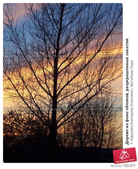 Купить «Дерево на фоне облаков, разукрашенных закатом», фото № 182077, снято 12 апреля 2006 г. (c) Карасева Екатерина Олеговна / Фотобанк Лори