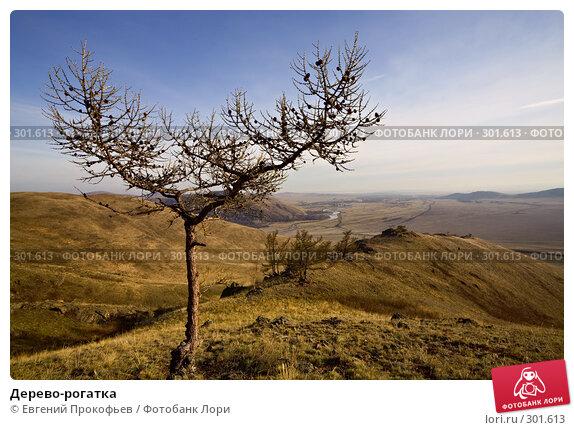Купить «Дерево-рогатка», фото № 301613, снято 20 апреля 2008 г. (c) Евгений Прокофьев / Фотобанк Лори