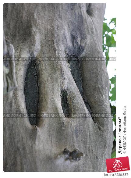 """Купить «Дерево с """"лицом""""», фото № 280557, снято 11 мая 2008 г. (c) ФЕДЛОГ.РФ / Фотобанк Лори"""