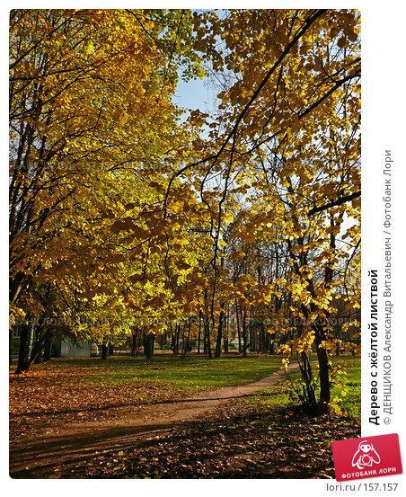 Дерево с жёлтой листвой, фото № 157157, снято 27 октября 2007 г. (c) ДЕНЩИКОВ Александр Витальевич / Фотобанк Лори