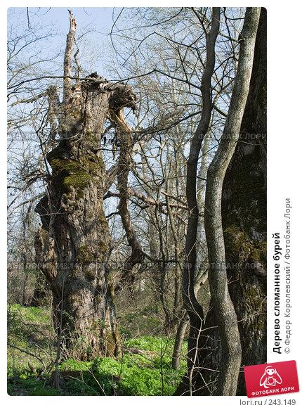 Дерево сломанное бурей, фото № 243149, снято 4 апреля 2008 г. (c) Федор Королевский / Фотобанк Лори