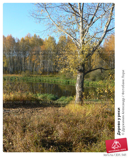 Купить «Дерево у реки», фото № 331141, снято 5 октября 2007 г. (c) Дружинин Александр / Фотобанк Лори