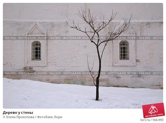 Дерево у стены, фото № 164993, снято 30 марта 2017 г. (c) Елена Прокопова / Фотобанк Лори