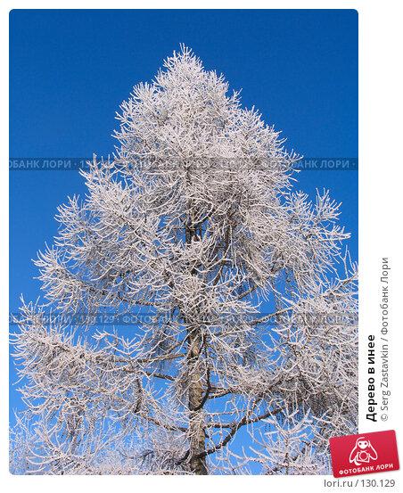 Дерево в инее, фото № 130129, снято 18 декабря 2005 г. (c) Serg Zastavkin / Фотобанк Лори