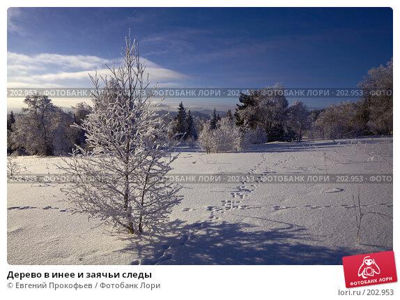 Дерево в инее и заячьи следы, фото № 202953, снято 8 января 2008 г. (c) Евгений Прокофьев / Фотобанк Лори