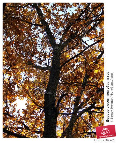 Купить «Дерево в осеннем убранстве», фото № 307401, снято 27 октября 2007 г. (c) Sergey Toronto / Фотобанк Лори