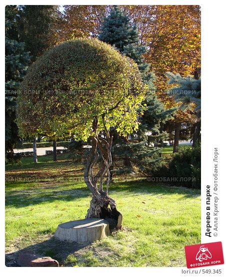 Купить «Дерево в парке», фото № 549345, снято 30 октября 2008 г. (c) Алла Кригер / Фотобанк Лори