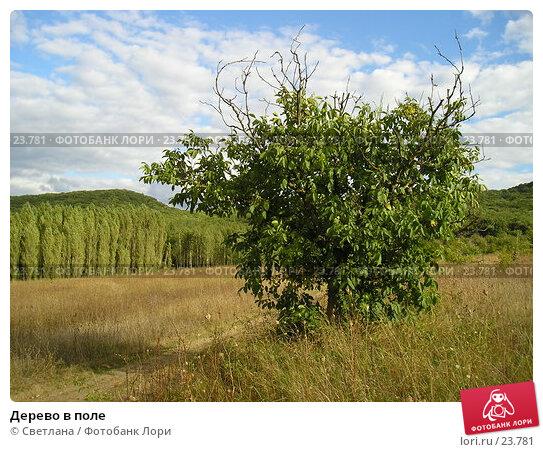 Дерево в поле, фото № 23781, снято 7 сентября 2006 г. (c) Светлана / Фотобанк Лори