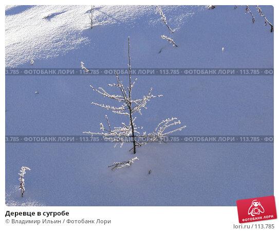 Деревце в сугробе, фото № 113785, снято 9 ноября 2007 г. (c) Владимир Ильин / Фотобанк Лори