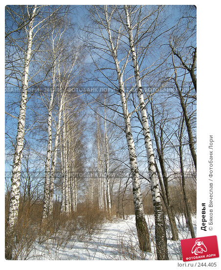 Деревья, фото № 244405, снято 22 марта 2008 г. (c) Бяков Вячеслав / Фотобанк Лори
