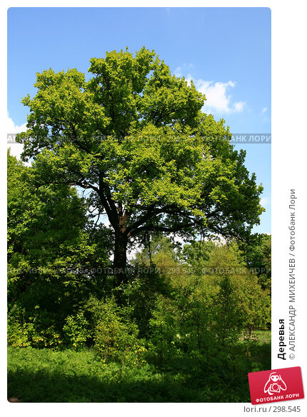 Деревья, фото № 298545, снято 18 мая 2008 г. (c) АЛЕКСАНДР МИХЕИЧЕВ / Фотобанк Лори