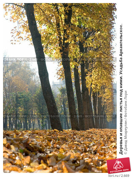 Купить «Деревья и опавшие листья под ними. Усадьба Архангельское.», фото № 2669, снято 3 октября 2005 г. (c) Давид Мзареулян / Фотобанк Лори