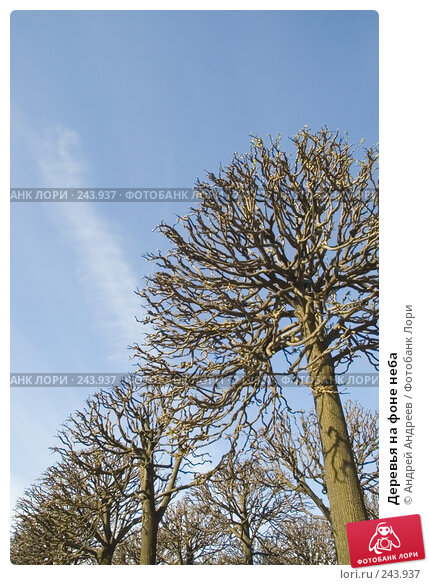 Деревья на фоне неба, фото № 243937, снято 14 мая 2006 г. (c) Андрей Андреев / Фотобанк Лори