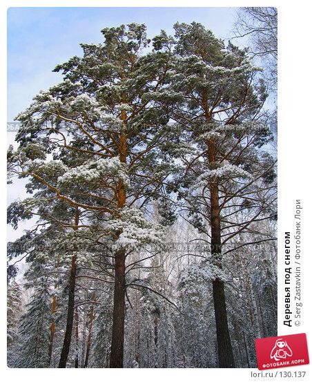 Деревья под снегом, фото № 130137, снято 23 марта 2005 г. (c) Serg Zastavkin / Фотобанк Лори