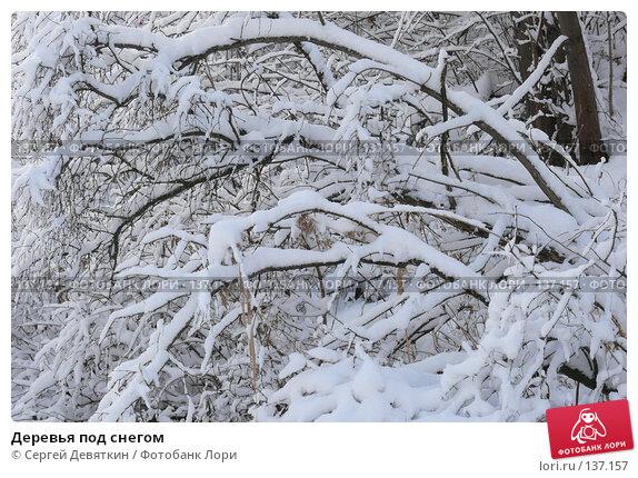 Деревья под снегом, фото № 137157, снято 4 декабря 2007 г. (c) Сергей Девяткин / Фотобанк Лори