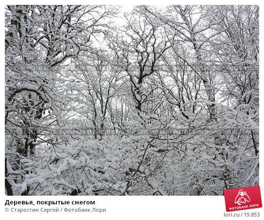 Купить «Деревья, покрытые снегом», фото № 19853, снято 23 февраля 2006 г. (c) Старостин Сергей / Фотобанк Лори