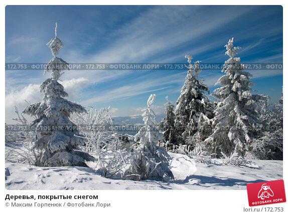 Деревья, покрытые снегом, фото № 172753, снято 7 марта 2006 г. (c) Максим Горпенюк / Фотобанк Лори