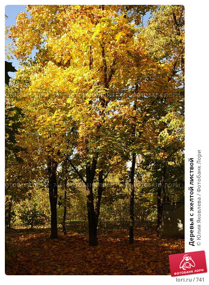 Деревья с желтой листвой, фото № 741, снято 1 октября 2005 г. (c) Юлия Яковлева / Фотобанк Лори