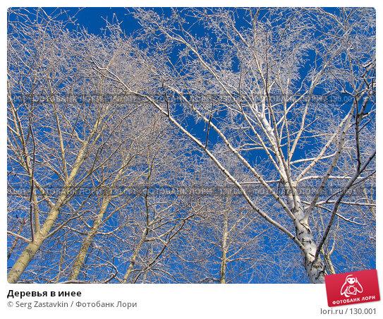 Деревья в инее, фото № 130001, снято 18 декабря 2005 г. (c) Serg Zastavkin / Фотобанк Лори