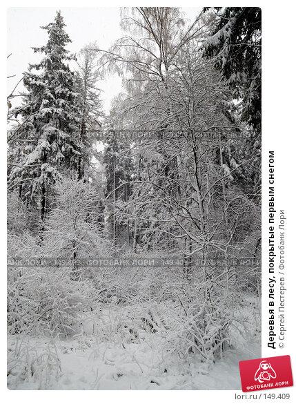 Деревья в лесу, покрытые первым снегом, фото № 149409, снято 14 октября 2007 г. (c) Сергей Пестерев / Фотобанк Лори