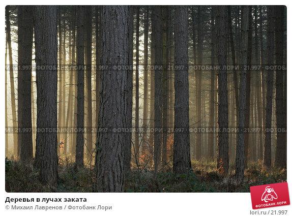 Деревья в лучах заката, фото № 21997, снято 1 февраля 2006 г. (c) Михаил Лавренов / Фотобанк Лори