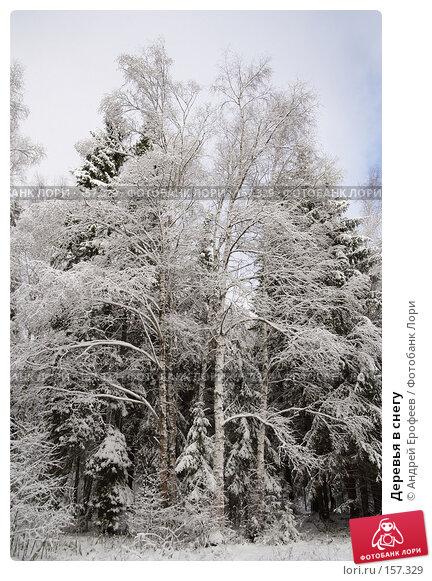 Деревья в снегу, фото № 157329, снято 11 ноября 2006 г. (c) Андрей Ерофеев / Фотобанк Лори
