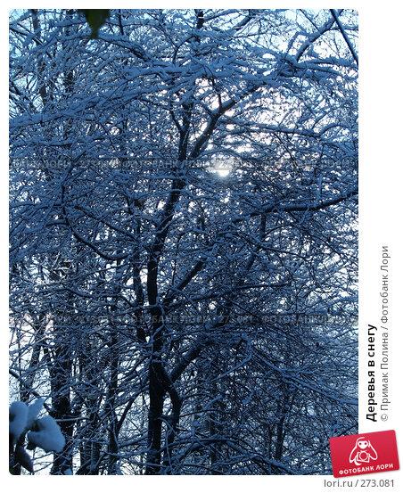 Купить «Деревья в снегу», фото № 273081, снято 30 октября 2006 г. (c) Примак Полина / Фотобанк Лори