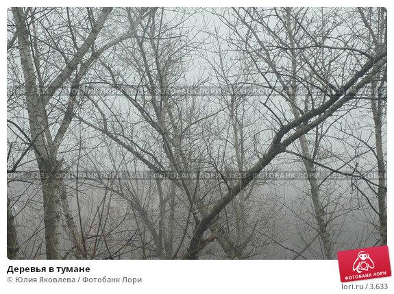 Деревья в тумане, фото № 3633, снято 10 апреля 2006 г. (c) Юлия Яковлева / Фотобанк Лори