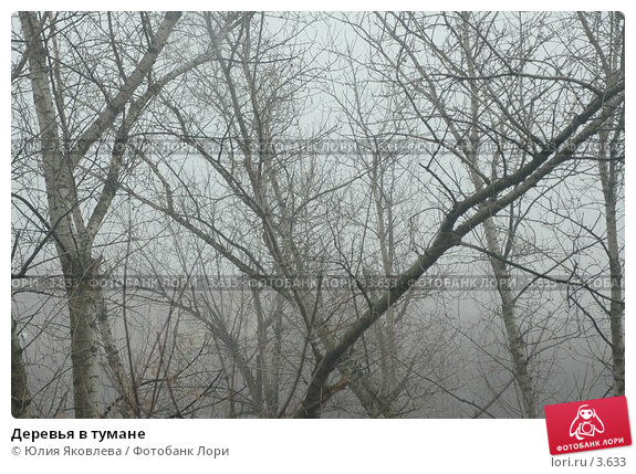 Купить «Деревья в тумане», фото № 3633, снято 10 апреля 2006 г. (c) Юлия Яковлева / Фотобанк Лори