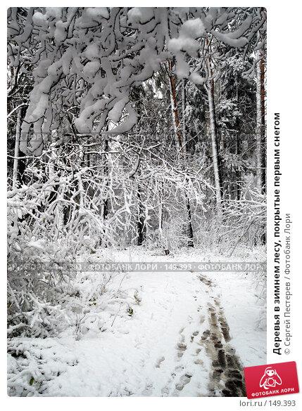 Деревья в зимнем лесу, покрытые первым снегом, фото № 149393, снято 14 октября 2007 г. (c) Сергей Пестерев / Фотобанк Лори